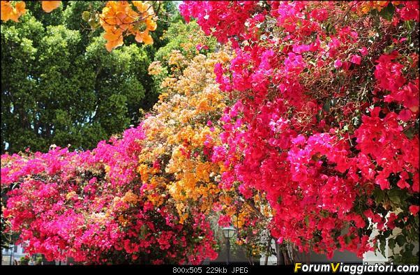 California, Land of Glittering Dreams (2018)-58img_2497.jpg