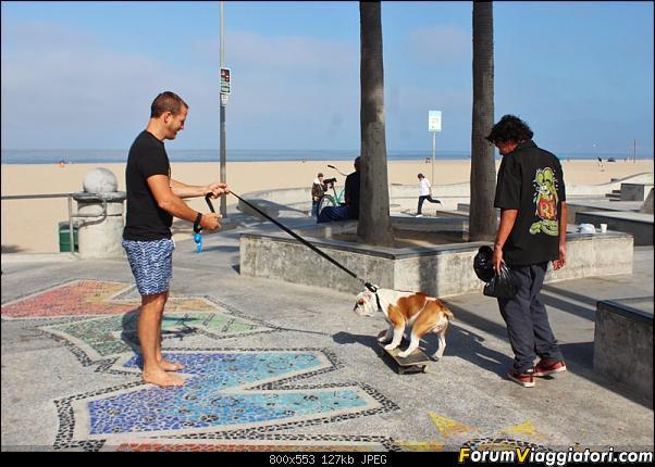 California, Land of Glittering Dreams (2018)-12img4819.jpg