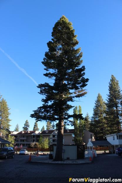 [Lake Tahoe] Travel Inn-travel-inn-south-tahoe-6-.jpg