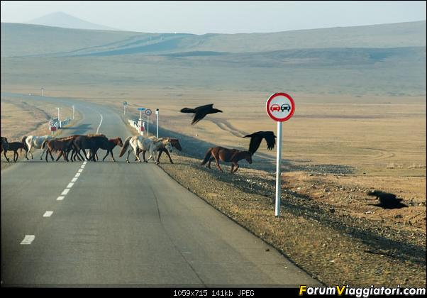 Nomadi e steppe, aquile e montagne: un viaggio in Mongolia-_dsc2508.jpg