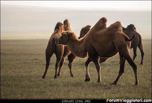 Nomadi e steppe, aquile e montagne: un viaggio in Mongolia-_dsc2520.jpg