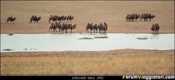 Nomadi e steppe, aquile e montagne: un viaggio in Mongolia-_dsc2743.jpg
