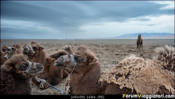 Nomadi e steppe, aquile e montagne: un viaggio in Mongolia-dsc_4078.jpg