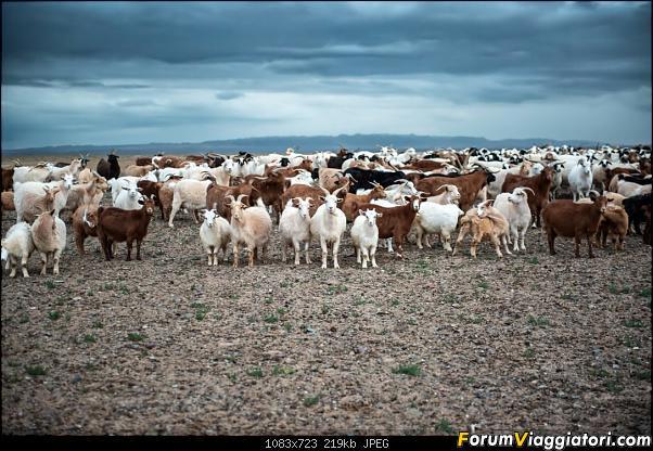 Nomadi e steppe, aquile e montagne: un viaggio in Mongolia-dsc_4083.jpg