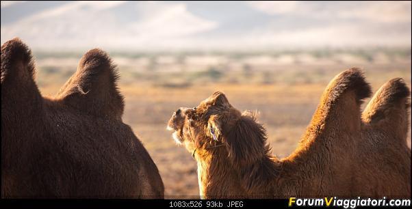 Nomadi e steppe, aquile e montagne: un viaggio in Mongolia-_dsc2865.jpg