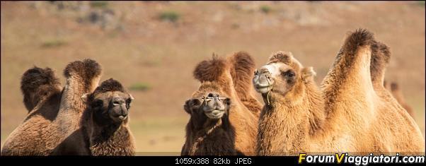 Nomadi e steppe, aquile e montagne: un viaggio in Mongolia-_dsc3075.jpg