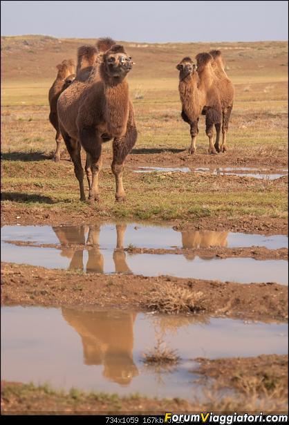 Nomadi e steppe, aquile e montagne: un viaggio in Mongolia-_dsc3084.jpg