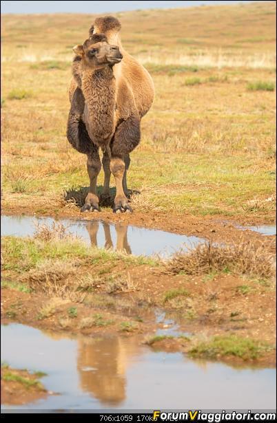 Nomadi e steppe, aquile e montagne: un viaggio in Mongolia-_dsc3094.jpg
