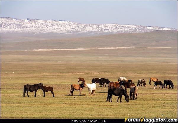 Nomadi e steppe, aquile e montagne: un viaggio in Mongolia-_dsc3101.jpg