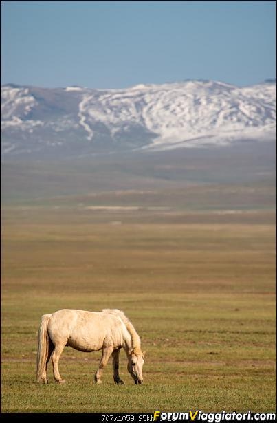 Nomadi e steppe, aquile e montagne: un viaggio in Mongolia-_dsc3105.jpg
