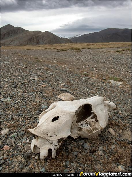 Nomadi e steppe, aquile e montagne: un viaggio in Mongolia-dsc_4311.jpg