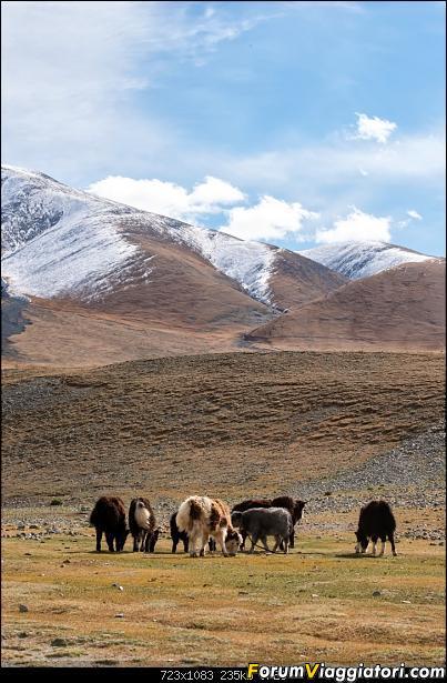 Nomadi e steppe, aquile e montagne: un viaggio in Mongolia-_dsc3439.jpg