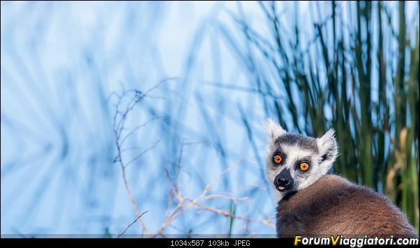 Sunti malgasci-dsc_4575.jpg