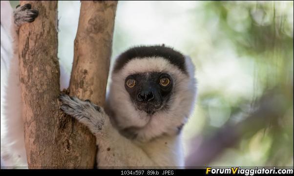 Sunti malgasci-dsc_4831.jpg