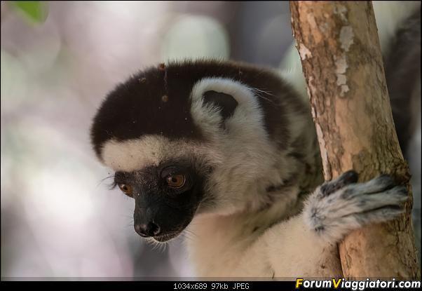 Sunti malgasci-dsc_4837.jpg
