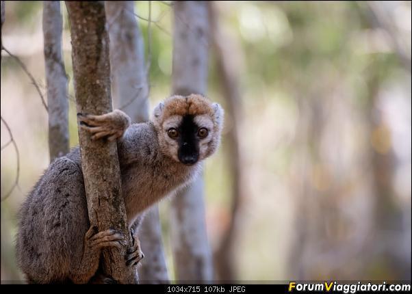Sunti malgasci-dsc_5631.jpg