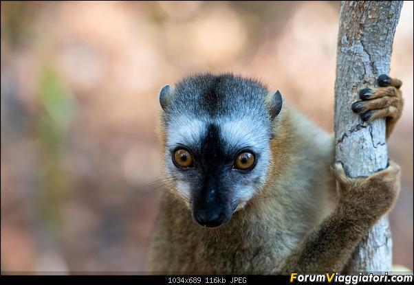 Sunti malgasci-dsc_5647.jpg
