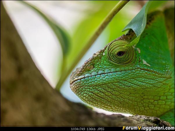 Sunti malgasci-dsc_6140.jpg