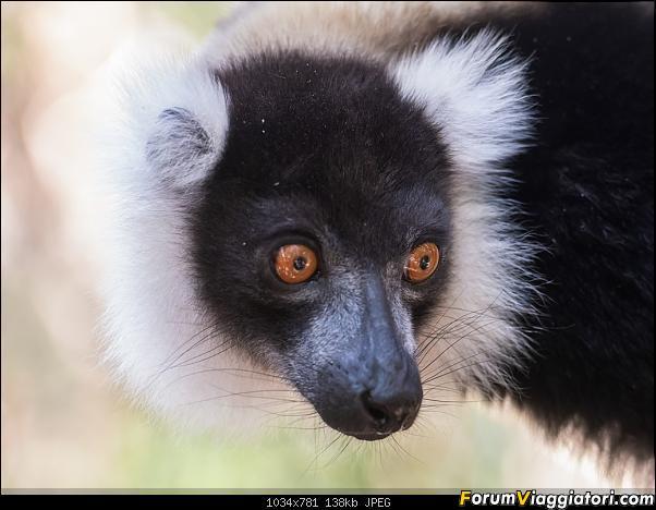 Sunti malgasci-dsc_6337.jpg
