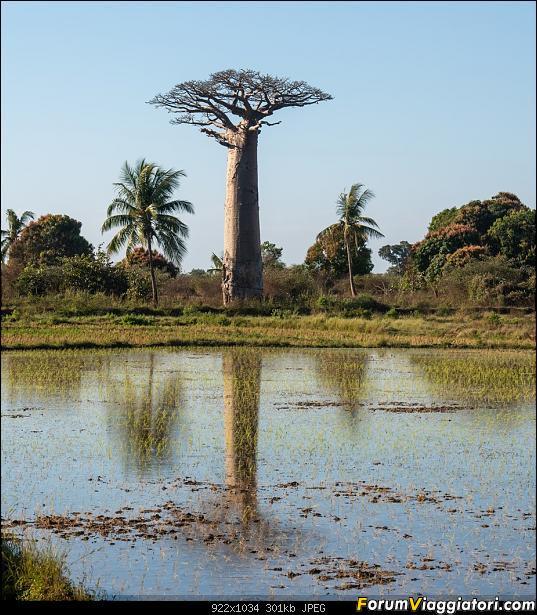 Sunti malgasci-dsc_5552.jpg