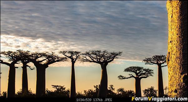Sunti malgasci-dsc_6033.jpg