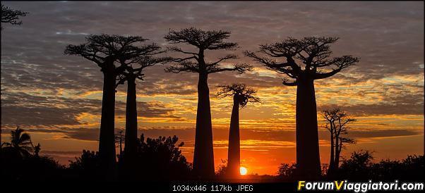 Sunti malgasci-dsc_6048.jpg