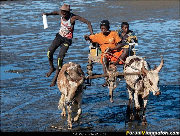 Sunti malgasci-dsc_5015.jpg