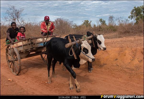 Sunti malgasci-dsc_1219.jpg