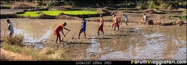 Sunti malgasci-dsc_1416.jpg