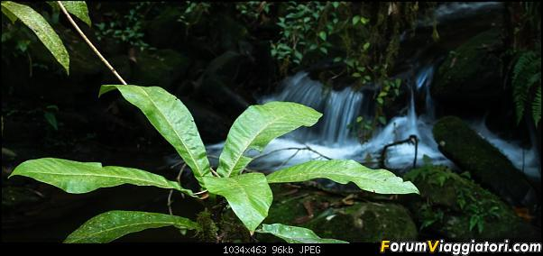 Sunti malgasci-dsc_4304.jpg