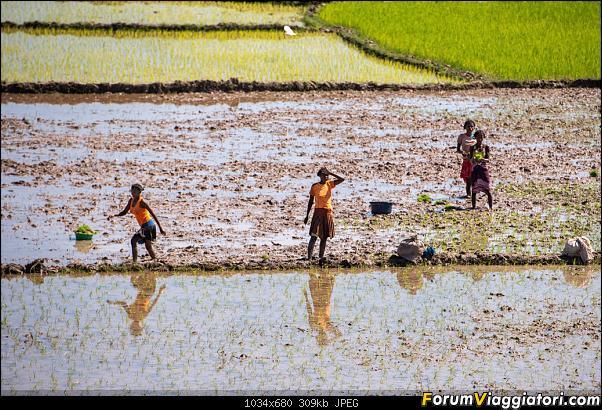 Sunti malgasci-dsc_5472.jpg