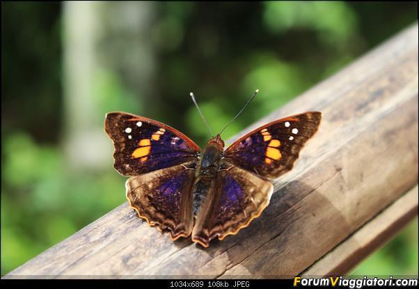 Da Buenos Aires e Iguazu alla Terra del Fuoco,sconfinando nella patagonia Cilena-070-farfalla.jpg