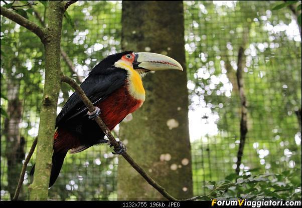 Da Buenos Aires e Iguazu alla Terra del Fuoco,sconfinando nella patagonia Cilena-022.jpg
