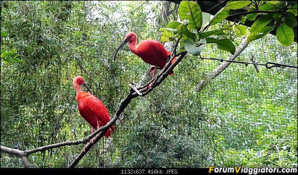 Da Buenos Aires e Iguazu alla Terra del Fuoco,sconfinando nella patagonia Cilena-019.jpg