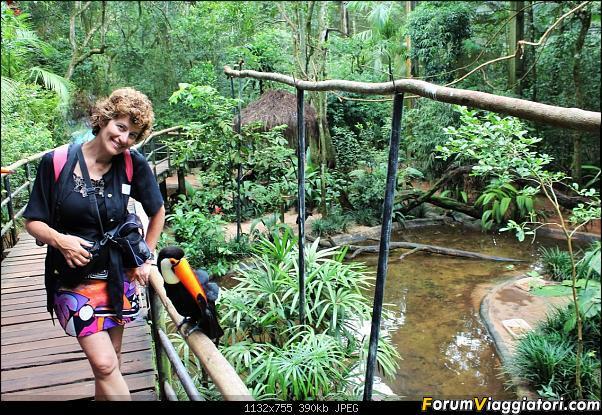 Da Buenos Aires e Iguazu alla Terra del Fuoco,sconfinando nella patagonia Cilena-016-tucano-laura.jpg