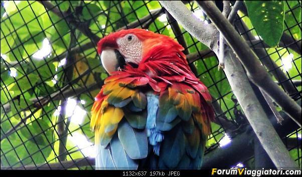 Da Buenos Aires e Iguazu alla Terra del Fuoco,sconfinando nella patagonia Cilena-035.jpg
