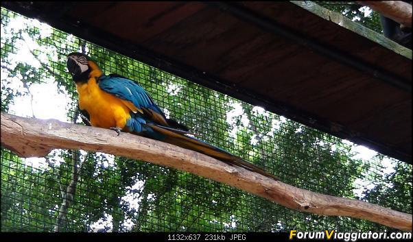 Da Buenos Aires e Iguazu alla Terra del Fuoco,sconfinando nella patagonia Cilena-031.jpg