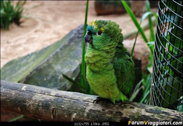 Da Buenos Aires e Iguazu alla Terra del Fuoco,sconfinando nella patagonia Cilena-028.jpg