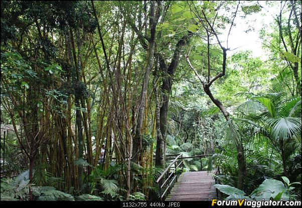 Da Buenos Aires e Iguazu alla Terra del Fuoco,sconfinando nella patagonia Cilena-023-bambu-gigante.jpg