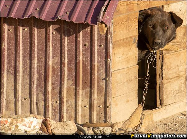 Nomadi e steppe, aquile e montagne: un viaggio in Mongolia-_dsc4141.jpg