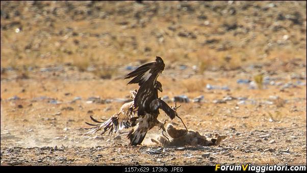 Nomadi e steppe, aquile e montagne: un viaggio in Mongolia-_dsc4169.jpg