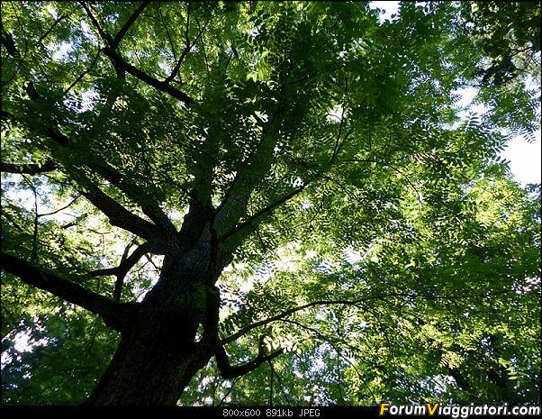 Slovenia, polmone verde d'Europa-p1820168.jpg