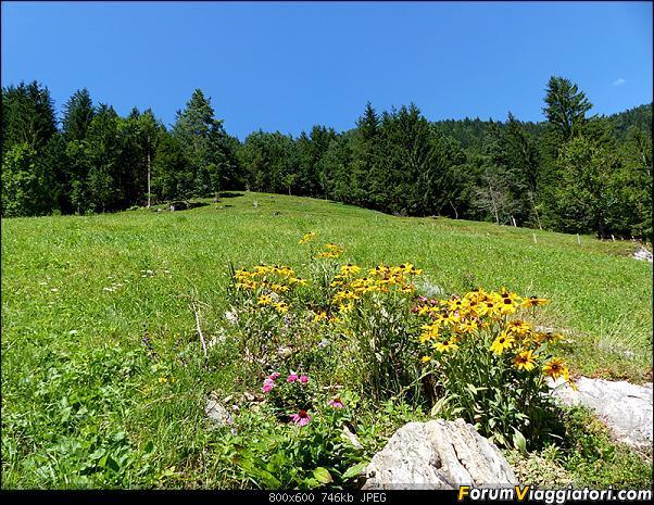 Slovenia, polmone verde d'Europa-p1830064.jpg