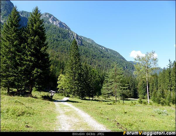 Slovenia, polmone verde d'Europa-p1830140.jpg